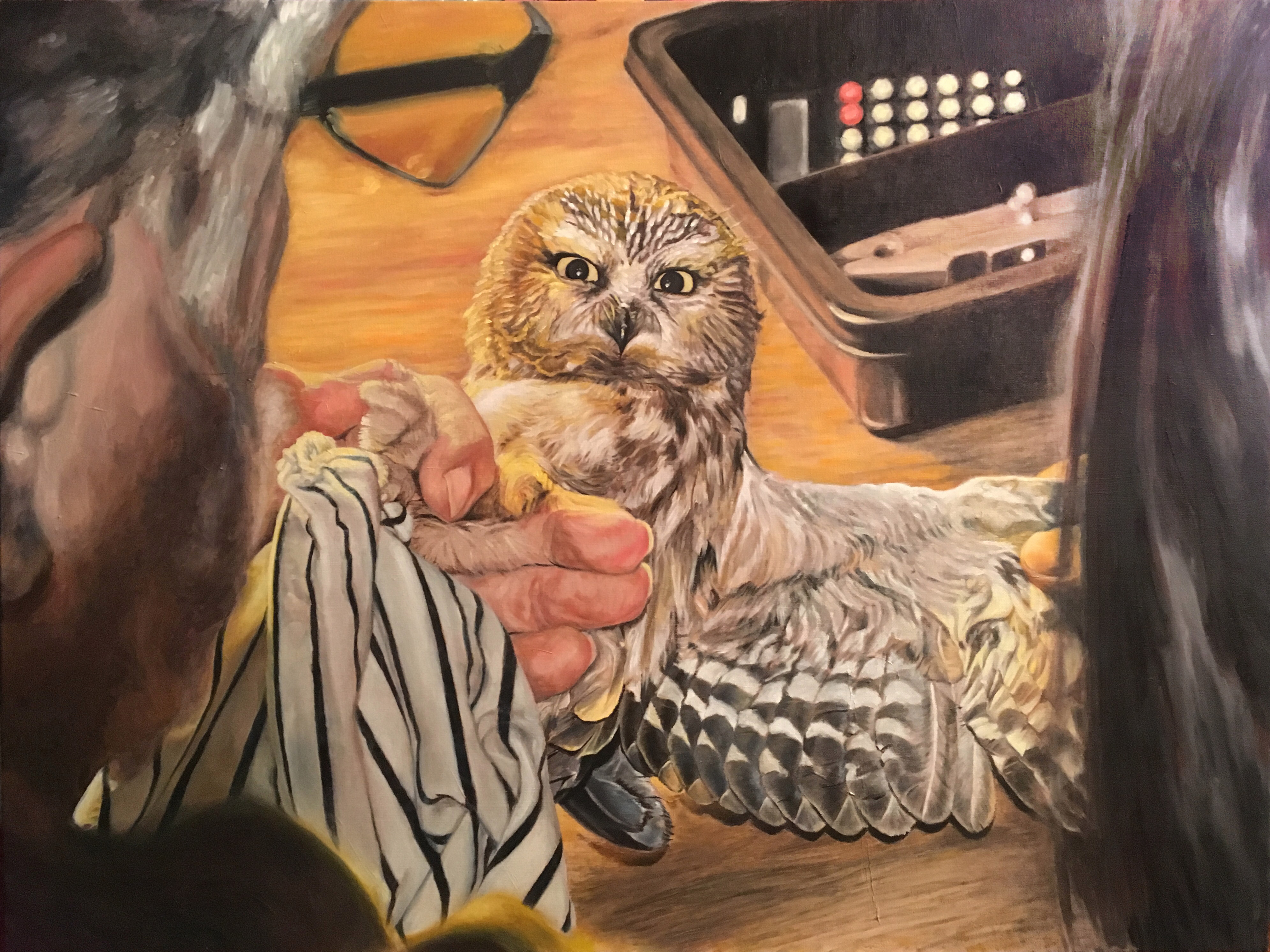 Owl Banding, Saw-Whet Owl, Tom Lincoln, Tracy Steen